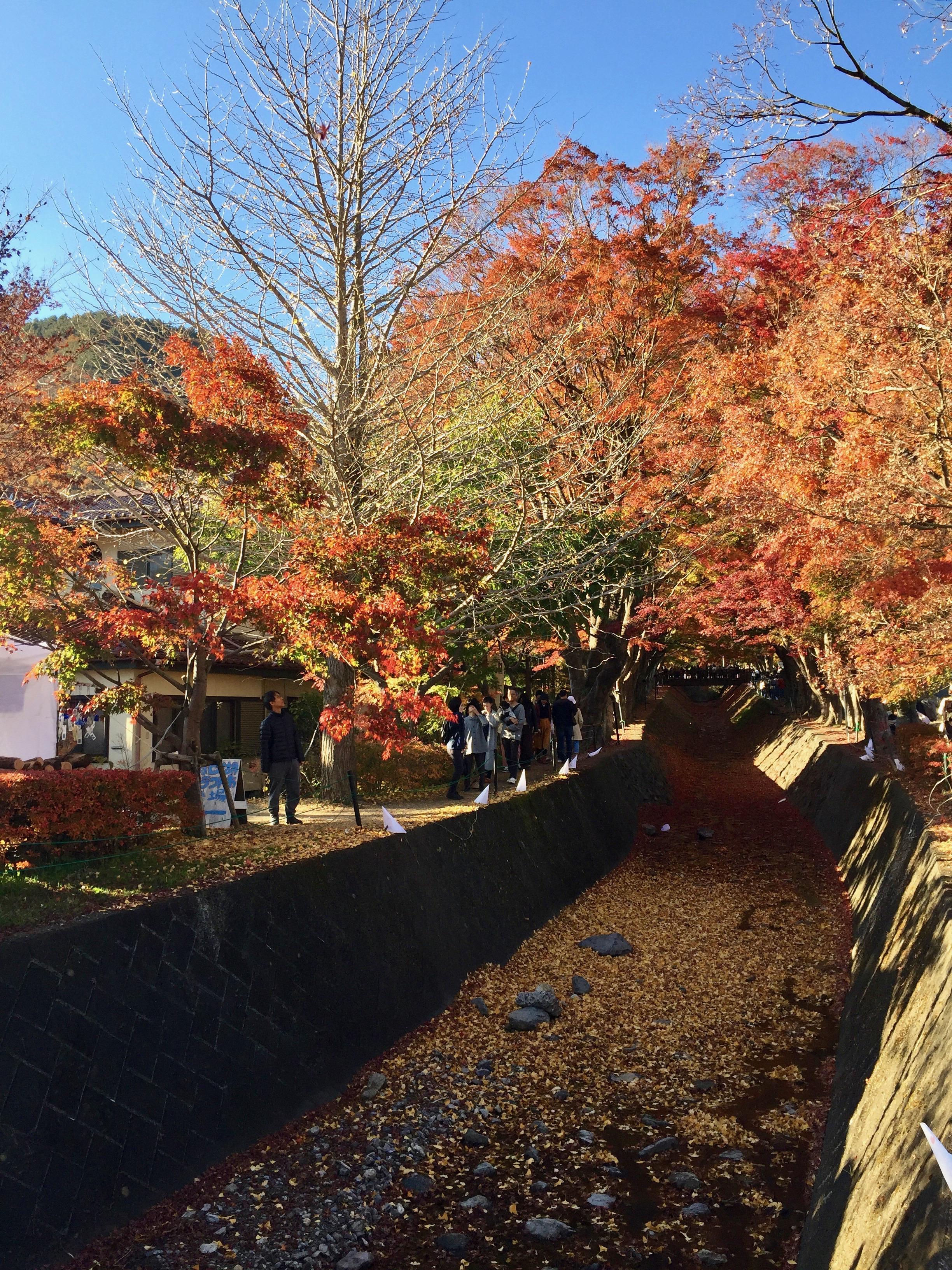 Mount Fuji Momji Corridor fall foliage