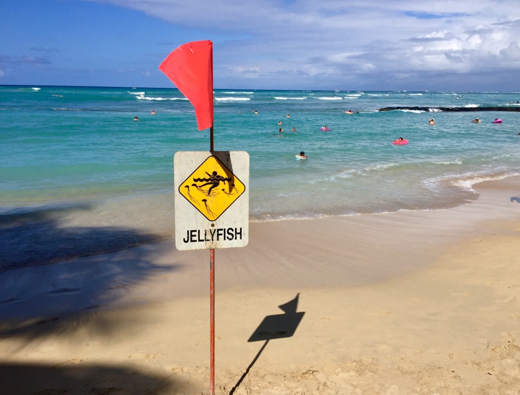 Watch for jellyfish in Honolulu.